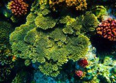 Lặn Biển Ngắm SAN HÔ KỲ CO, Trải Nghiệm Tuyệt Vời